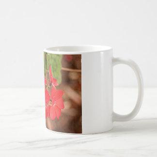 Flores rojas del geranio en la floración taza