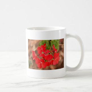 Flores rojas del geranio en la floración tazas