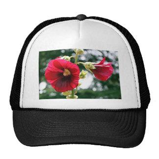 Flores rojas del Hollyhock en la floración Gorras De Camionero