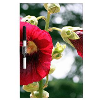 Flores rojas del Hollyhock en la floración Pizarra