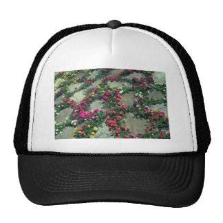 Flores rojas del musgo color de rosa (Portulaca gr Gorro De Camionero