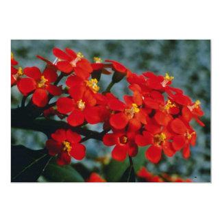Flores rojas del penacho de escarlata de Fulgens Invitaciones Personales