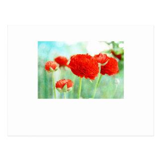 Flores rojas del ranúnculo postales