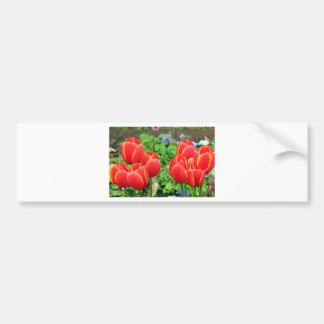 Flores rojas del tulipán en la floración 1 pegatina de parachoque