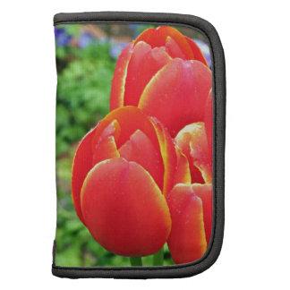 Flores rojas del tulipán en la floración 1 planificadores