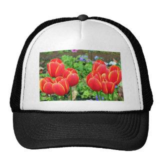 Flores rojas del tulipán en la floración 1 gorros