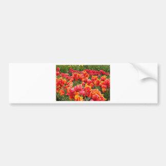 Flores rojas del tulipán en la floración 2 etiqueta de parachoque