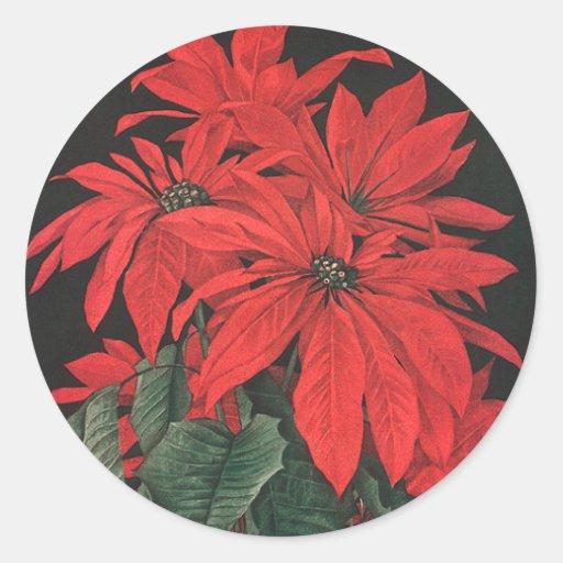 Flores rojas florecientes del Poinsettia del Etiqueta Redonda