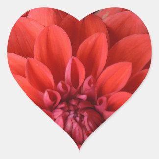 Flores rojas hermosas de la dalia pegatina en forma de corazón