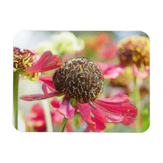 Flores rojas hermosas del Helenium Iman