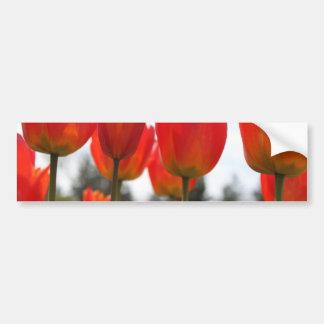 Flores rojas hermosas del tulipán pegatina de parachoque