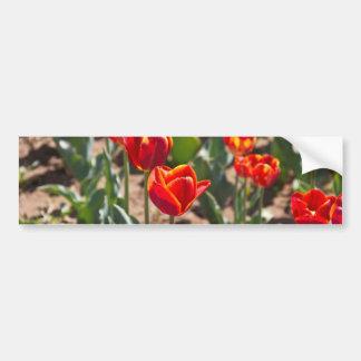 Flores rojas hermosas del tulipán con extremidades pegatina de parachoque