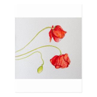 Flores rojas pintadas a mano de las amapolas postales