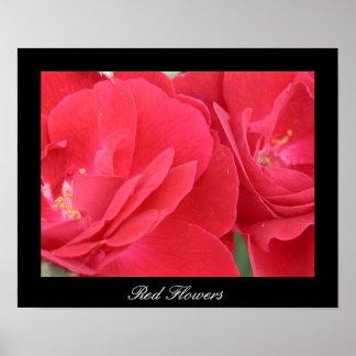 Flores rojas poster