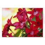 Flores rojas tarjeta