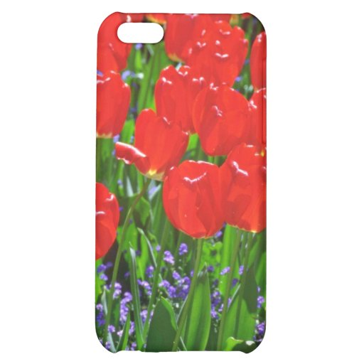 Flores rojas translúcidas de los tulipanes