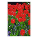 Flores rojas translúcidas de los tulipanes poster