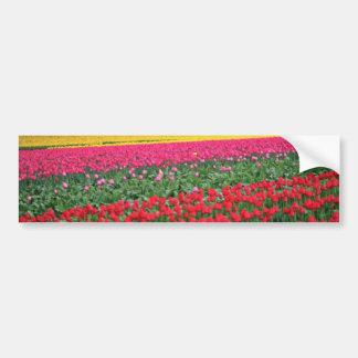 Flores rojas y amarillas del campo del tulipán etiqueta de parachoque