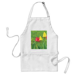 Flores rojas y amarillas del tulipán del color delantal