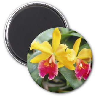 Flores rojas y amarillas rojas de la orquídea del  imán redondo 5 cm