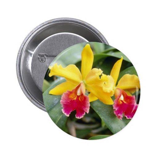 Flores rojas y amarillas rojas de la orquídea del  pin redondo 5 cm