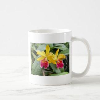 Flores rojas y amarillas rojas de la orquídea del  taza básica blanca