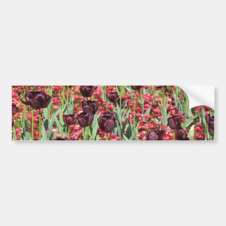 Flores rojas y tulipanes oscuros pegatina de parachoque