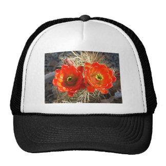 Flores rojos del cactus de la taza de clarete gorros