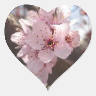 Flores rosadas - árbol de ciruelo colcomanias corazon