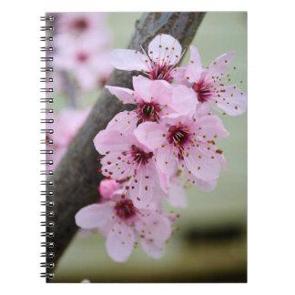Flores rosadas bonitas de la flor de cerezo libreta