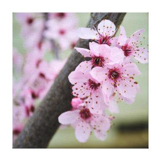 Flores rosadas bonitas de la flor de cerezo impresión en lienzo estirada