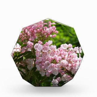 Flores rosadas bonitas del laurel de montaña