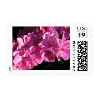 Flores rosadas bonitas sellos