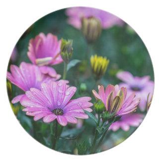 Flores rosadas brillantes de la margarita plato de cena