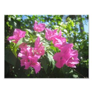 Flores rosadas cojinete
