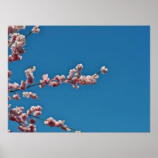 Flores rosadas contra el cielo azul poster