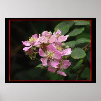 Flores rosadas de Blackberry Póster