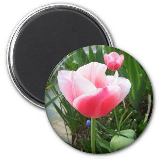 Flores rosadas de CricketDiane de los tulipanes de Imanes