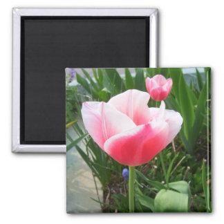 Flores rosadas de CricketDiane de los tulipanes de Iman