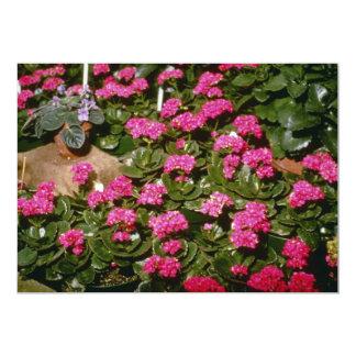 """Flores rosadas de Kalanchoe """"Solferinopurpur"""" Invitacion Personalizada"""