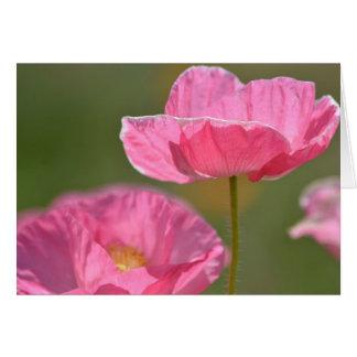 Flores rosadas de la amapola de Islandia Felicitación