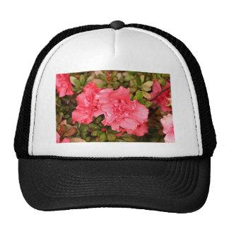 Flores rosadas de la azalea en la floración gorro de camionero