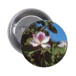 Flores rosadas de la flor de la magnolia pin