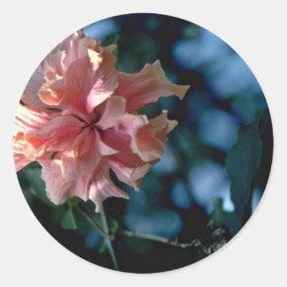 Flores rosadas de la flor del racimo pegatina redonda