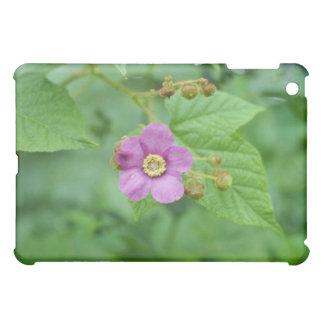 Flores rosadas de la frambuesa floreciente (Rubus