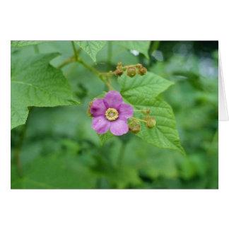 Flores rosadas de la frambuesa floreciente (Rubus  Felicitación