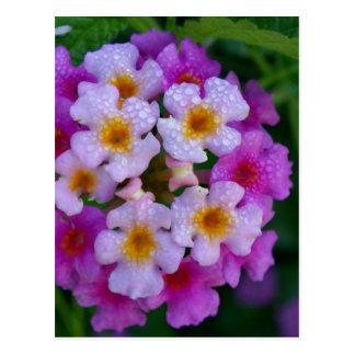 Flores rosadas de la mala hierba de mariposa tarjeta postal