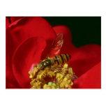 Flores rosadas de la mosca de la flor postales