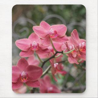 Flores rosadas de la orquídea alfombrillas de ratón