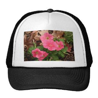 Flores rosadas de la petunia en la floración gorro de camionero